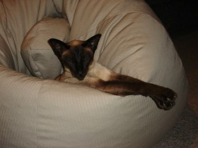 Sasha - about 8 years old, loved her bean bag, enjoying the fire on a cold winters evening